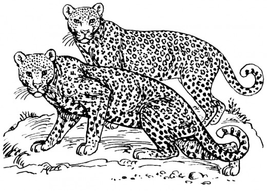 Animal Camouflage Coloring Pictures : Free coloring pages of camouflage animals