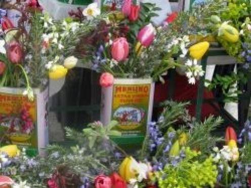 Olive Oil Cans as Flower containers