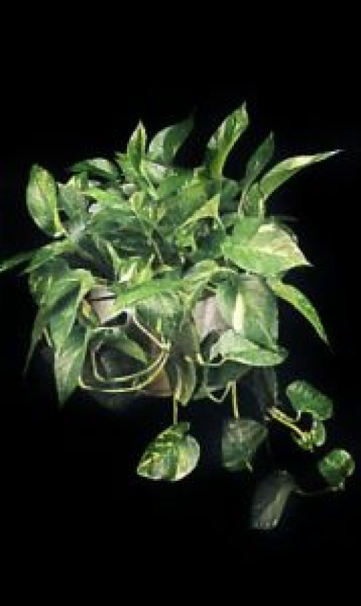 Poisonous Plants To Cats Most Complete List Hubpages
