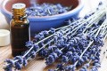 Lavender Essential Oils and Pregnancy