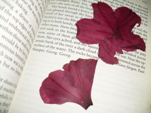 Two Crimson Colored Blossoms