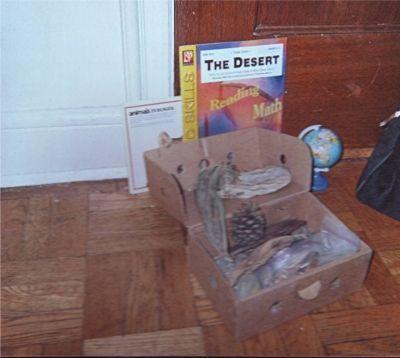 Sonora Desert Habitat Box
