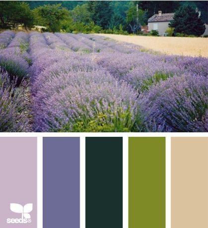Wildflower Color Palette