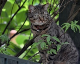 Cat framed by garden greenery