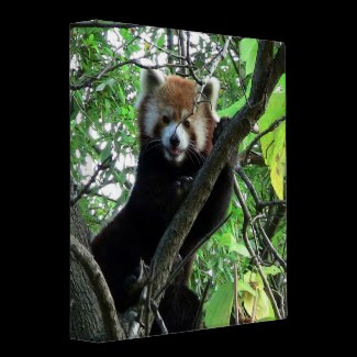 Binder and Additional Items bearing this image are Available for Purchase at: