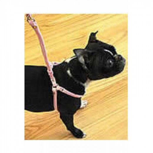 Ceilidh (Boston Terrier) in the Rolled Cloth Step-in Harness