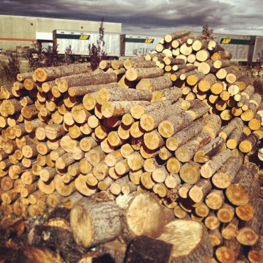 Firewood is cheap with all the beetle-kill in Medicine Bow Nat'l