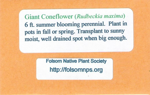 Friends and family enjoy the wildflower seeds we include in Christmas cards.
