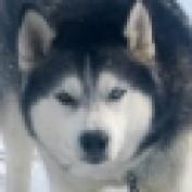 MakinBacon profile image