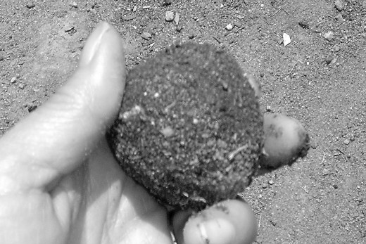 Mud shaped into a nice ball.