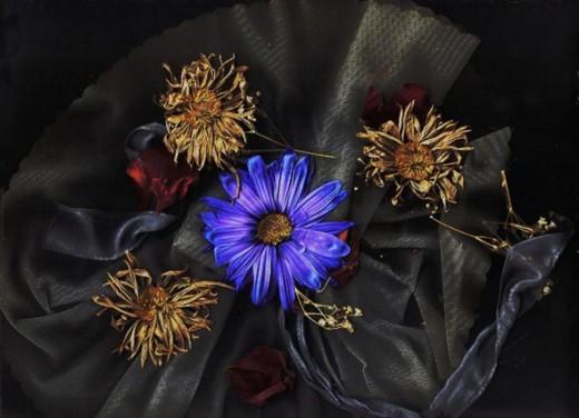 Petals y Toule Sacredcyn