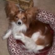 iheartdogs profile image