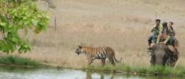 Tiger Show on Elephant Back