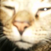 myra636 profile image