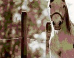 Horsekeeping for Beginners