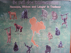 Primate distribution in Thailand