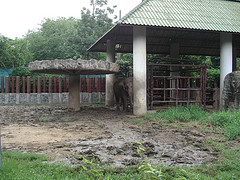 A portion of the rather muddy elephant enclosure