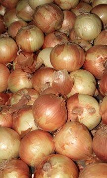 Onions Background Photo