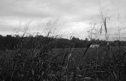 Farm Field Scene