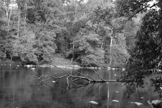 Peaceful Black and White River Landscape