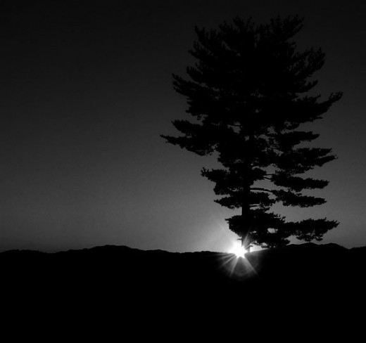 silhouette-of-tree-and-mountains-at-sunrise
