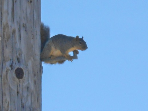 Hello Mr. Squirrel, or is it Ms.?
