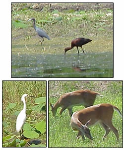 Collage of Salt Plains wildlife credit: Oklahoma State Dept. of Tourism.