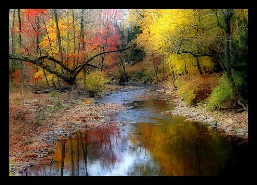 A beautiful riparian forest, by digitalart2
