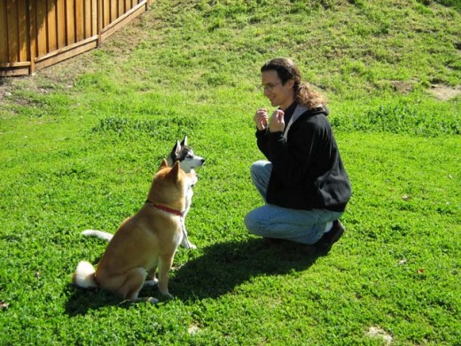 Reward based dog discipline is safer because there is little danger for your dog to become fearful, aggressive, or stressed.
