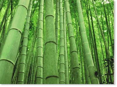 Bamboo flooring, definite green alternative