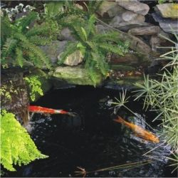 Feng Shui Garden Pond with Koi