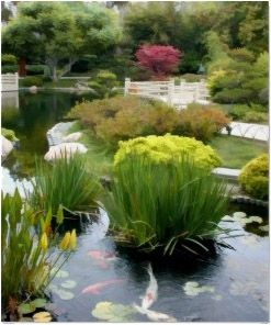 Japanese Garden Pond with Koi Poster