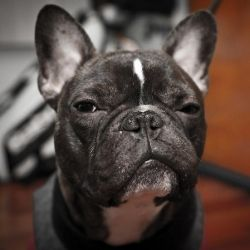 Dogs Fart - Dog Gas - Flatulence in Dogs