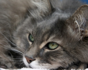 Do you have questions about cat urinary problems?