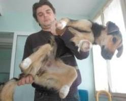 The Heartbreak of Animal Cruelty