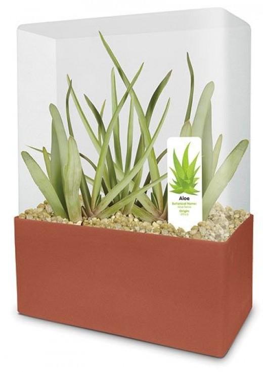 Leaving Gift Idea- Aloe