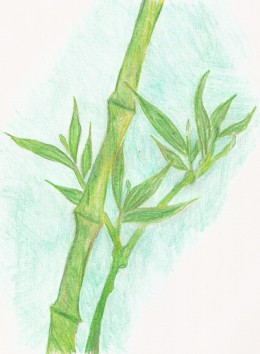 A drawing I did the middle of last year of my thriving bamboo plant.