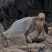 galapagosonline profile image