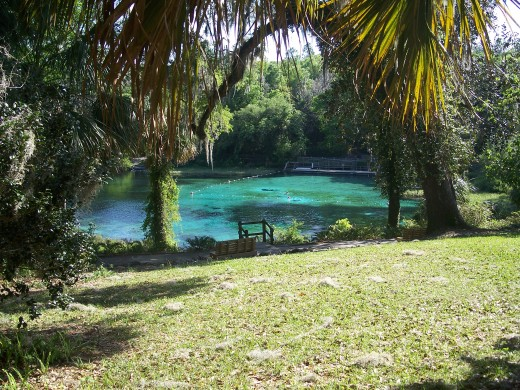 Swimming area at Rainbow Springs State Park in Florida