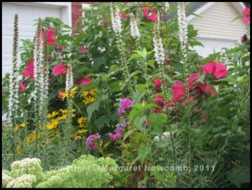 Momma's perennial garden.