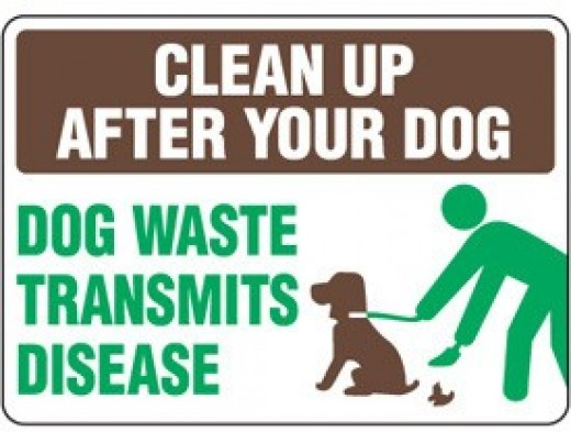 Clean up after your dog