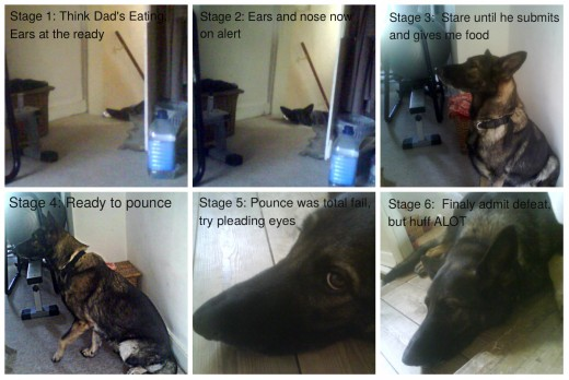 The 6 Stages of Sasha.  Understand you dog