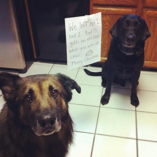 Desperate Dogs