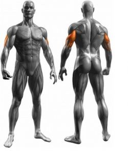 Overhead tricep extensions using resistand band tricep diagram