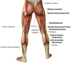 Hamstring Curls Using Resistance Bands Muscles Used