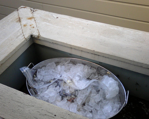 Brining Turkey with Ice Cubes Over the Plastic Bag (Photo courtesy by MikeLove from Flickr)