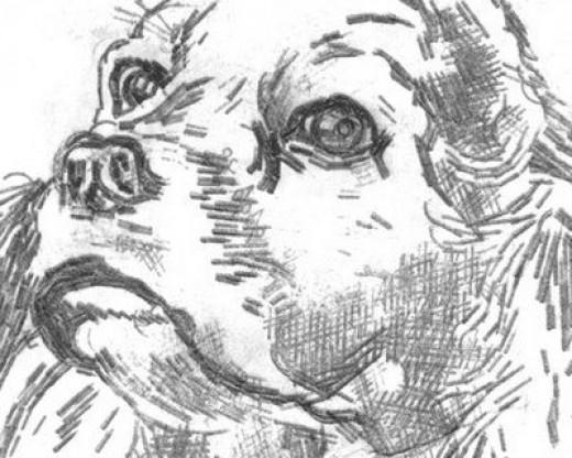 """My Dog"" Detail"
