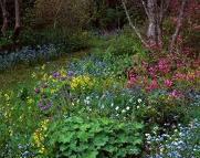 garden of gratitude