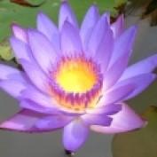 Nayana LM profile image