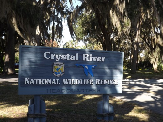 Crystal River National Wildlife Refuge established in 1983 specifically for the protection of the endangered West Indian Manatee--Homosassas, FL